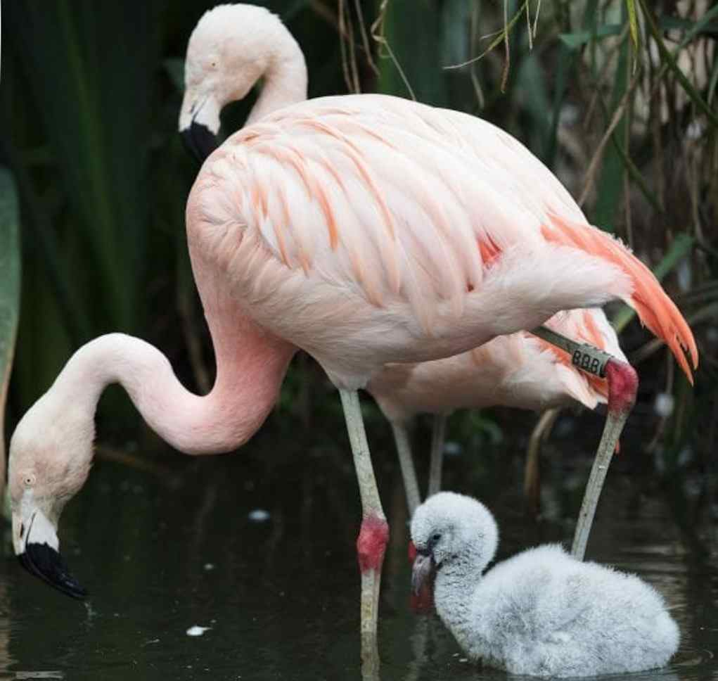 flamingo dublin zoo s
