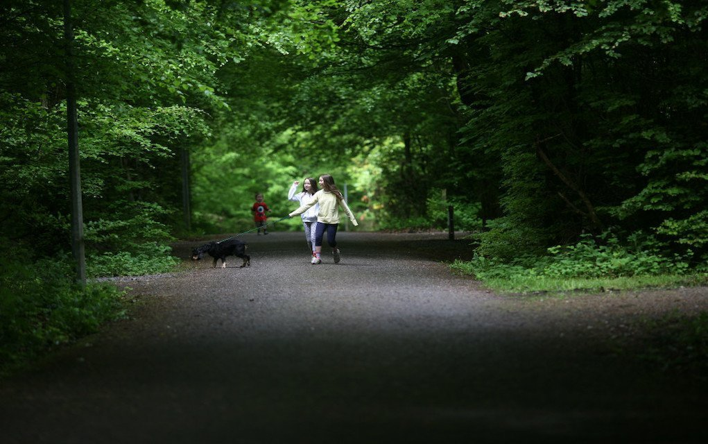 Family Walks in Roscommon Lough Key Forest and Activity Park girls with dog day out with kids in Ireland