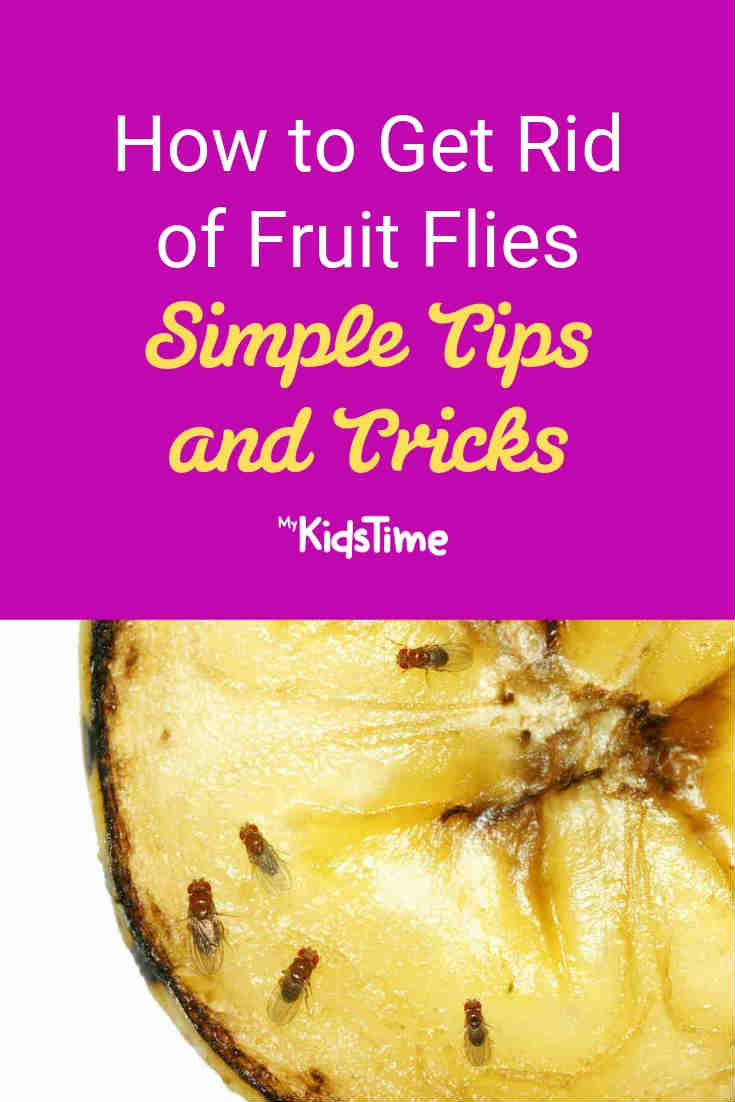 How to get rid of fruit flies - Mykidstime