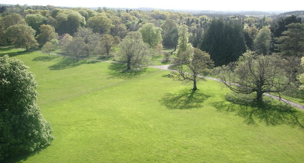 great lawn at Lough Key Forest and Activity Park Family walks in Roscommon