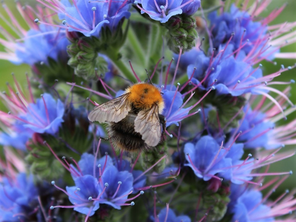Bees at Fota House and Gardens fun things to do with kids in Cork