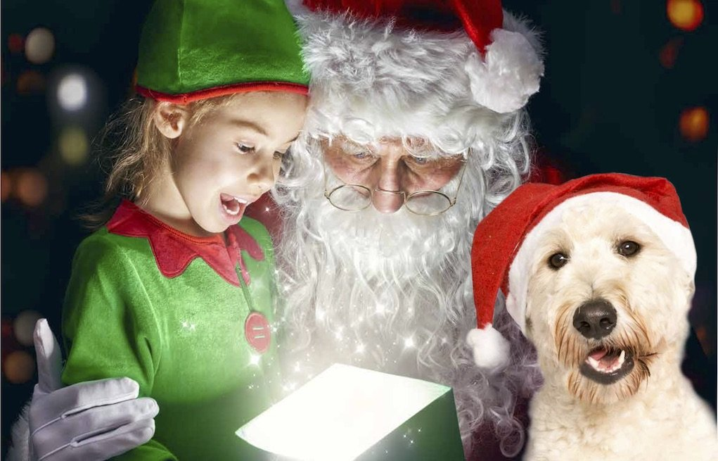 Irish Guide Dogs Santa visits