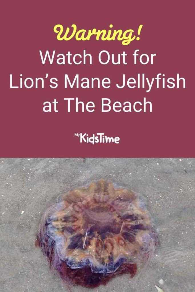 Warning! Watch Out for Lion's Mane Jellyfish at The Beach