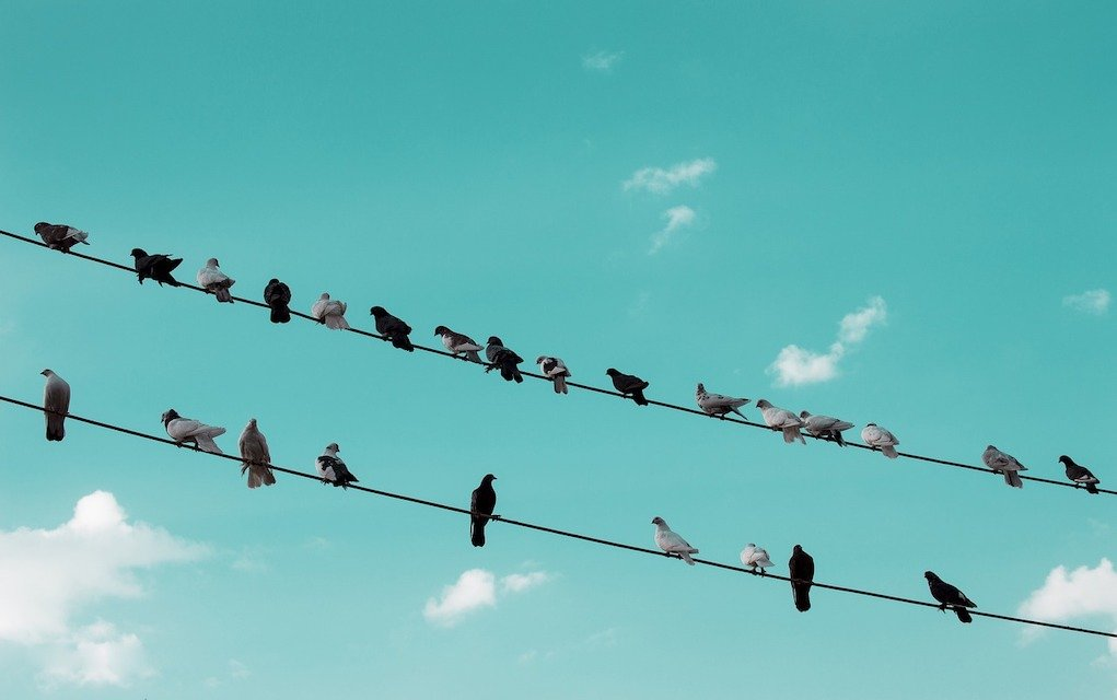 birds on electricity power lines fun science facts for kids
