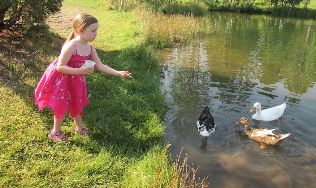 girl feeding ducks fun things to do with kids in Cork Fota House