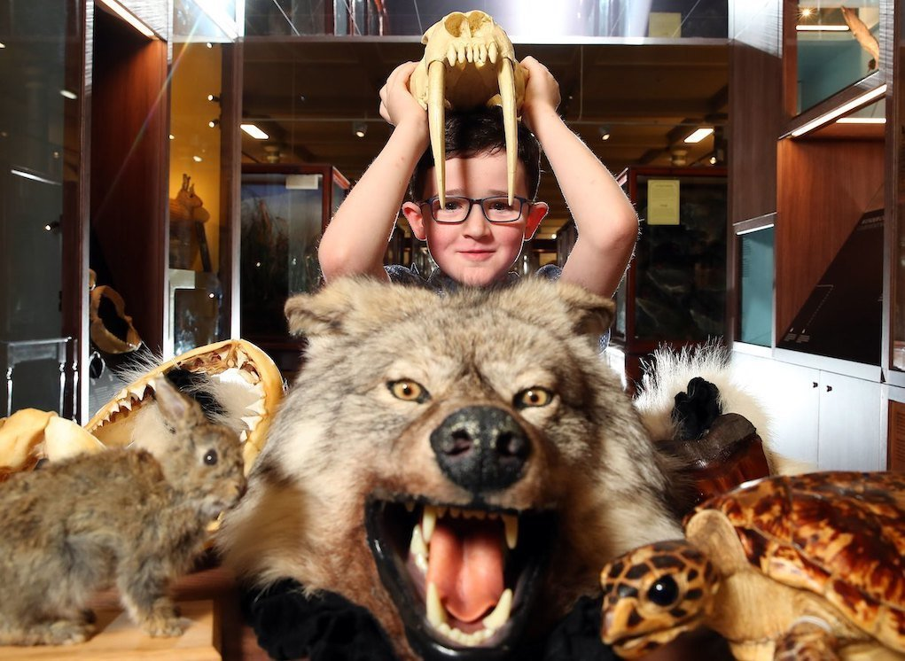 NMI Natural History Museum Dublin Wonder Cabinet Places to take your child this summer