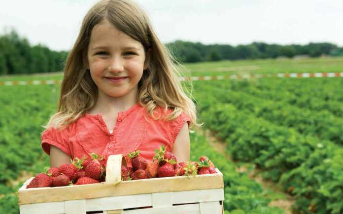 Pick Your Own Farms in Ireland and UK - Mykidstime
