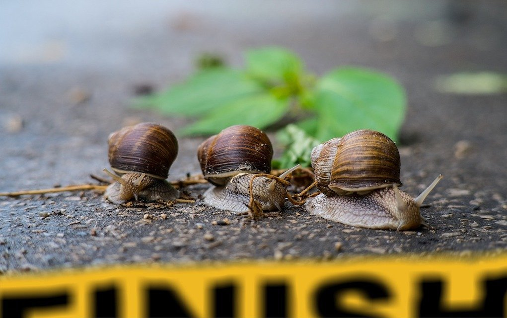 Snail Race rainy day games