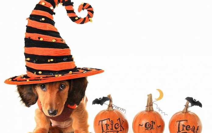 Halloween family break offer at The Connacht Hotel Galway
