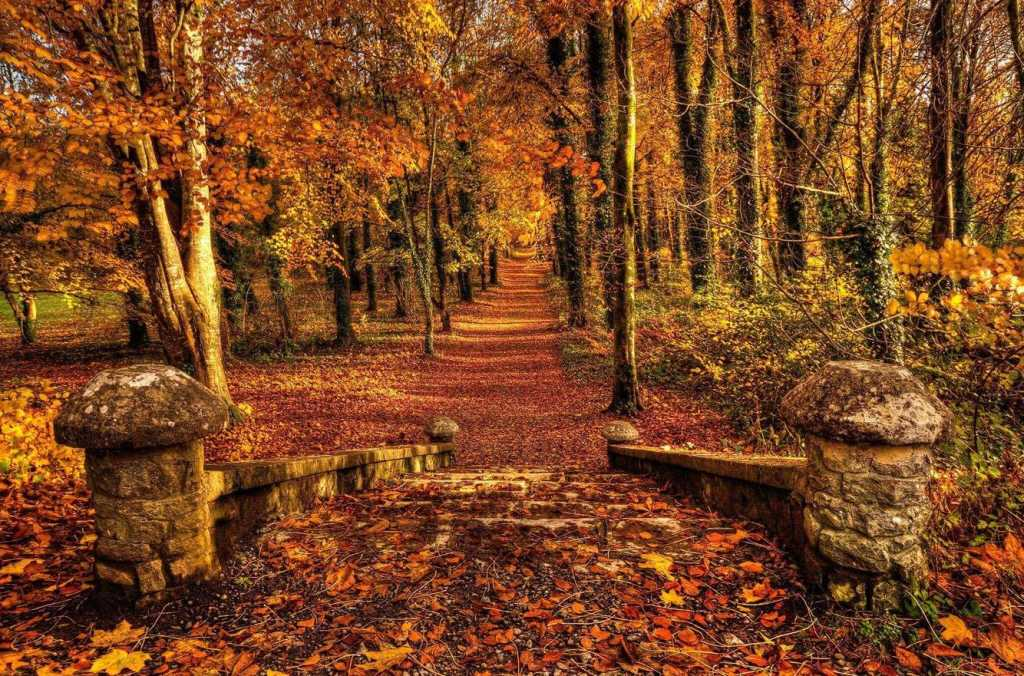 coole park autumn leaves Ireland