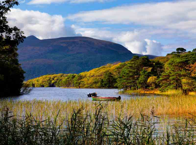 killarney national park autumn leaves Ireland
