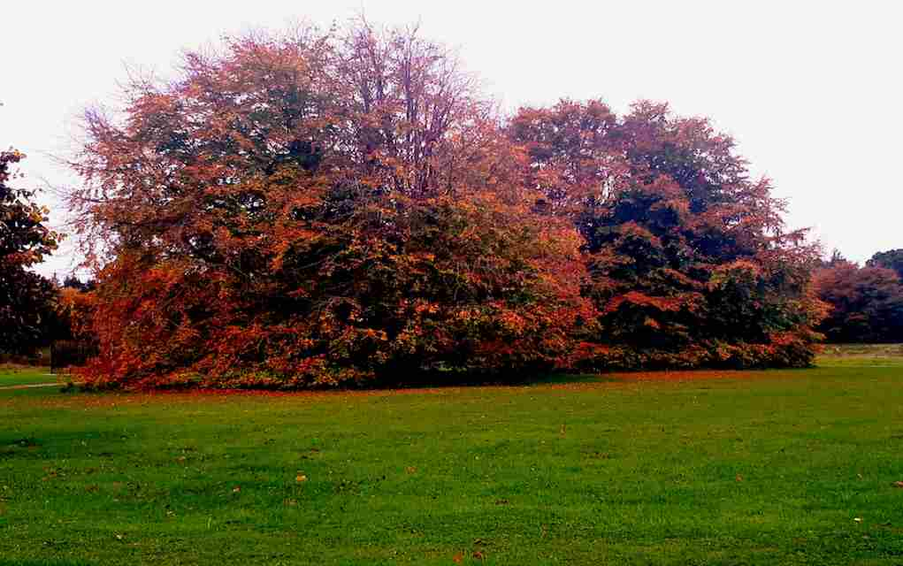 lough key autumn trees