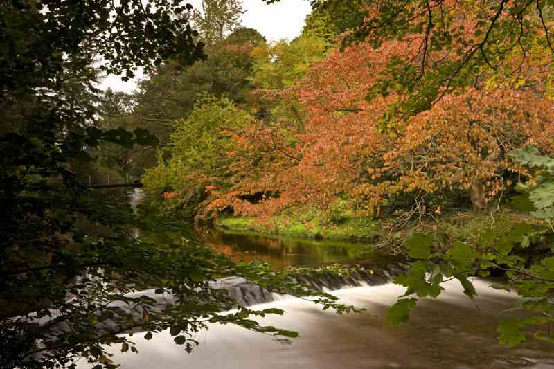 mount usher gardens autumn