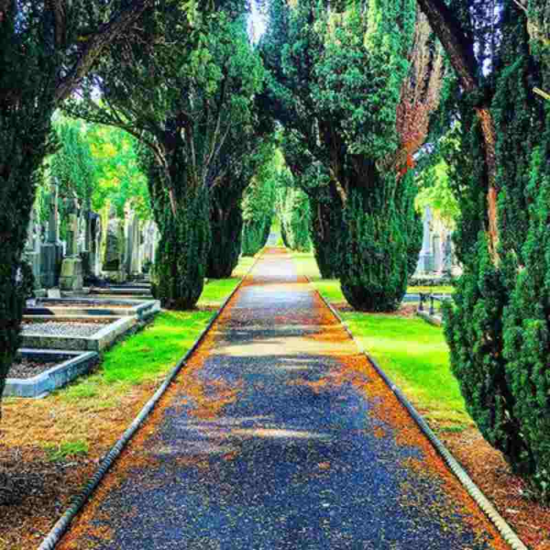 mid term tales glasnevin cemetery museum