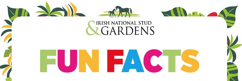 Fun Facts from The Irish National Stud and Gardens