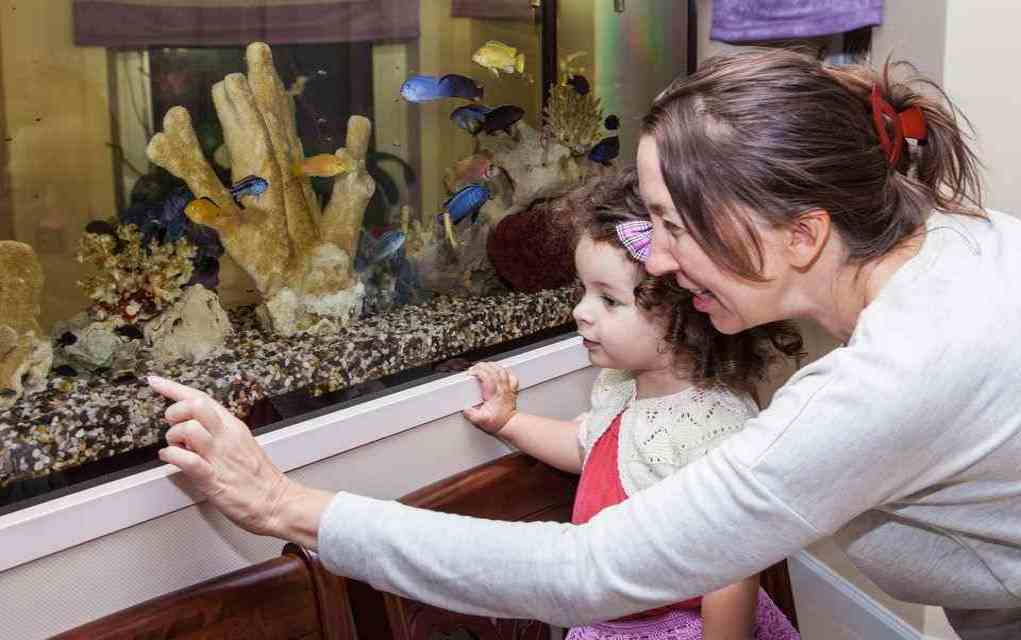benefits of owning an aquarium for kids