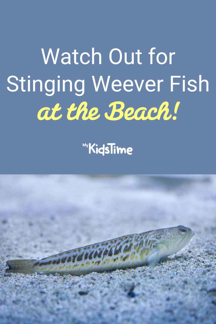 Ouch! Watch Out for Stinging Weever Fish at the Beach - Mykidstime
