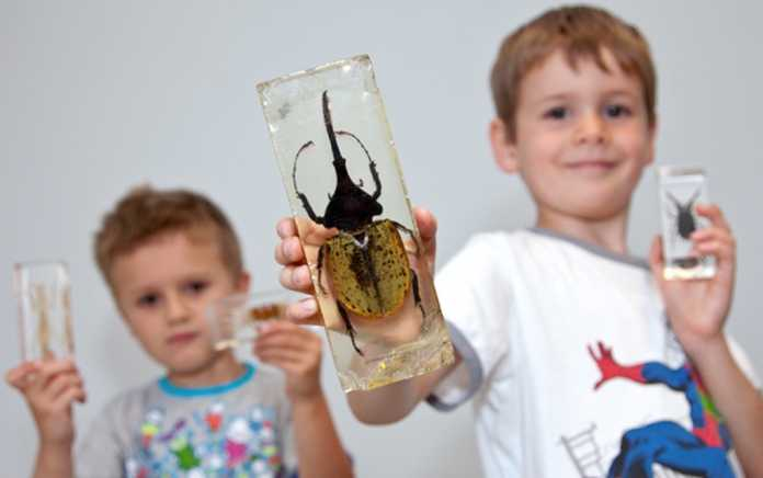 nmi Museum Natural History free things to do with the family this summer