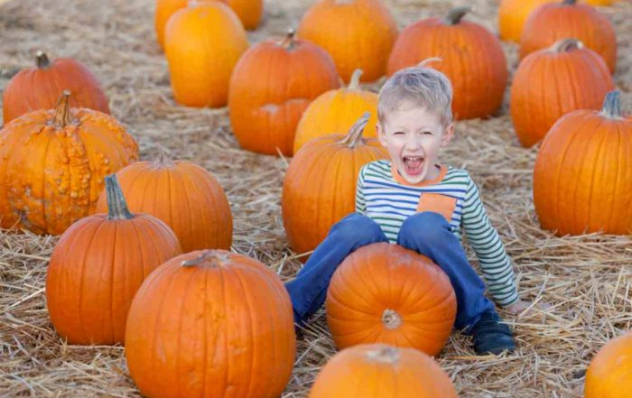 Places to go Pumpkin Picking in Ireland - Mykidstime