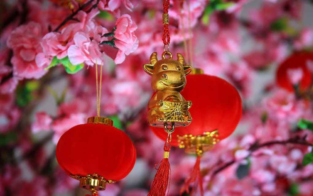 Chinese New Year Year of the Ox (1)