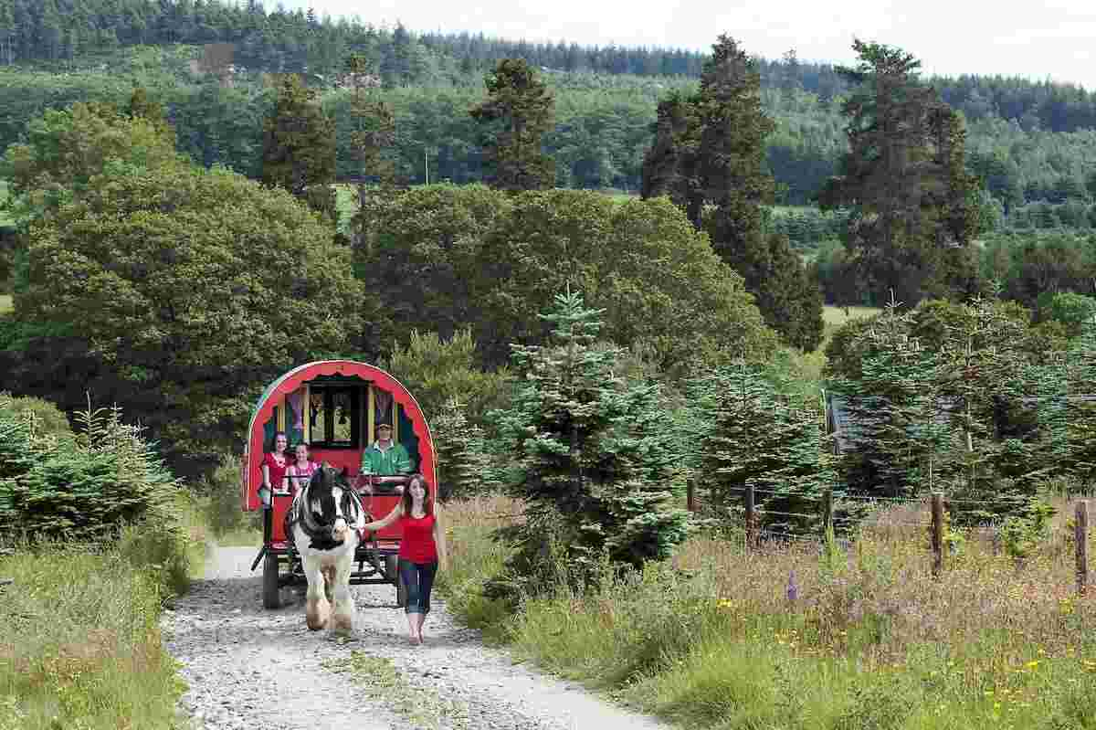 Places to see horses in Ireland Clissmann Horse Caravan Experience