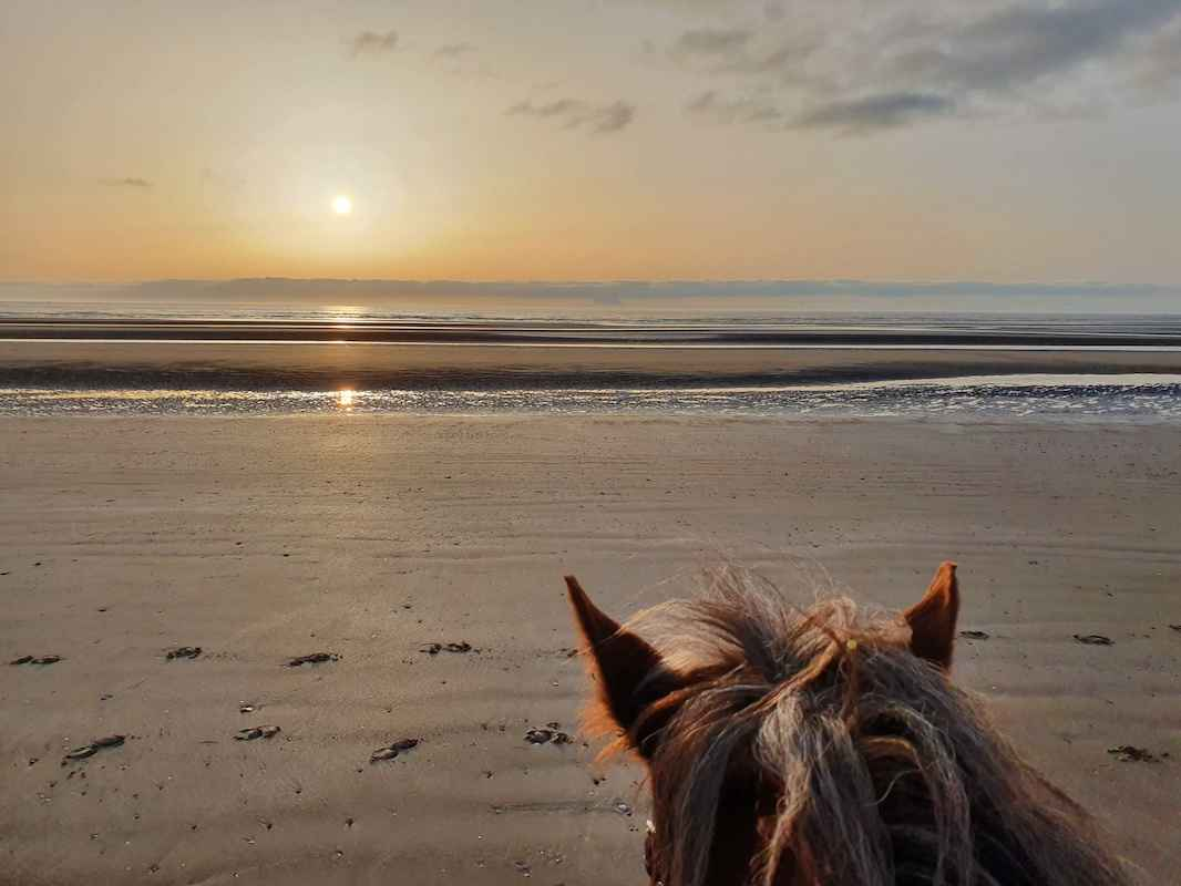 places to see horses in Ireland corballis
