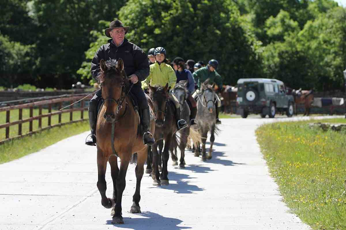Places to see horses in Ireland - Dartfield Equestrian
