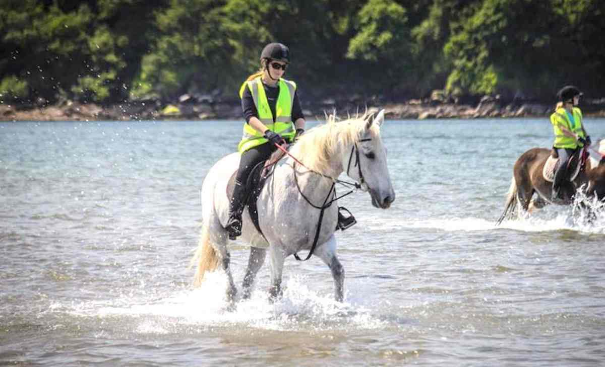 PLaces to see horses in Ireland Dingle Horseriding Treks