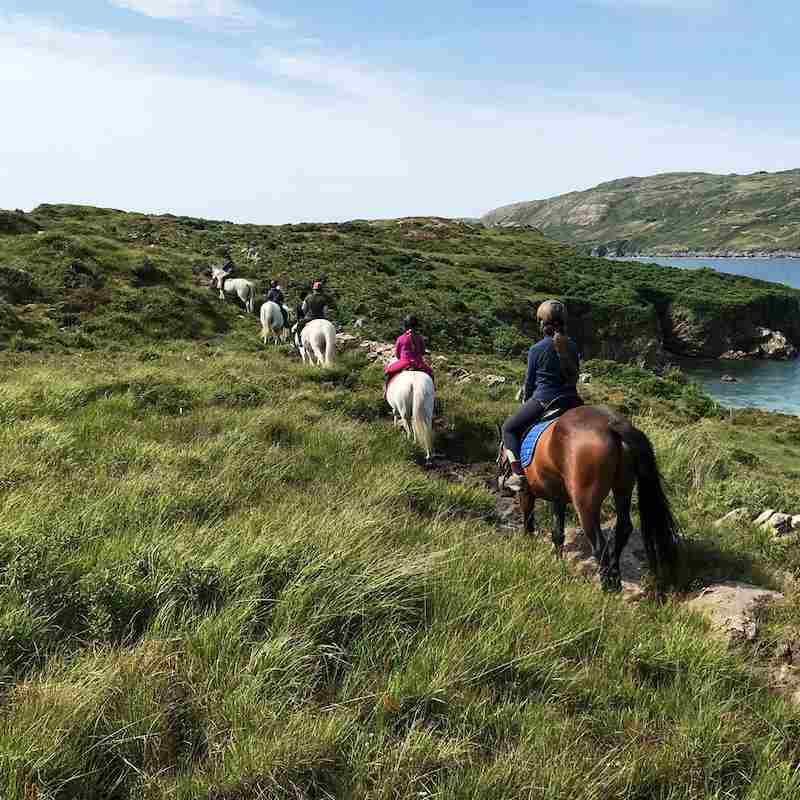 Errislannan for places to see horses in ireland