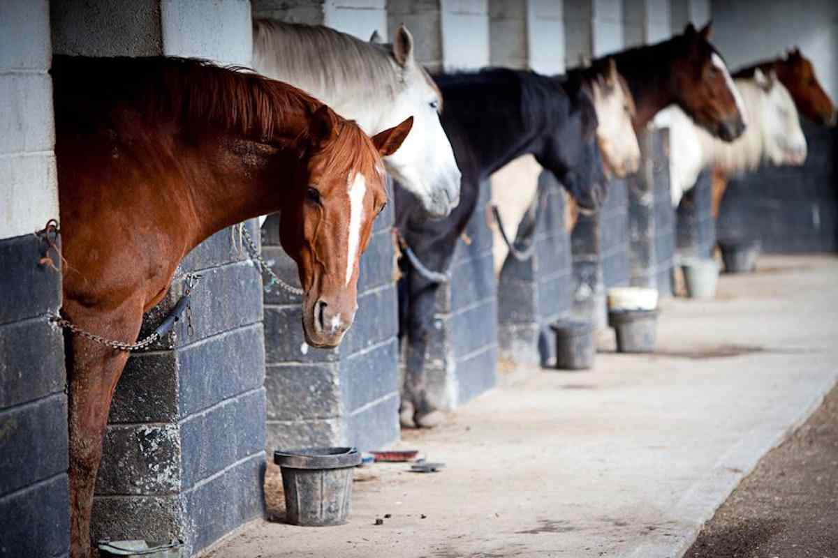 Places to see horses - Slieve Aughty Centre