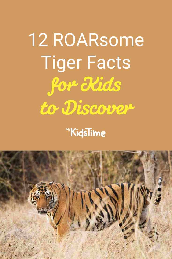 12 ROARsome Cool Tiger Facts for Kids to Discover - Mykidstime