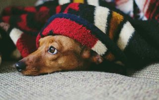Tips-to-help-keep-your-house-warm-this-winter