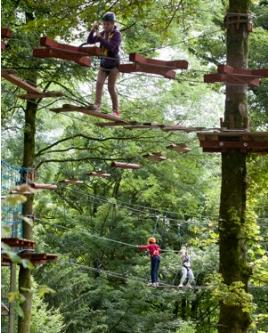 castlecomer discovery park treetop walk